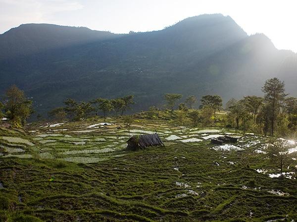 Rice paddies in Kathmandu